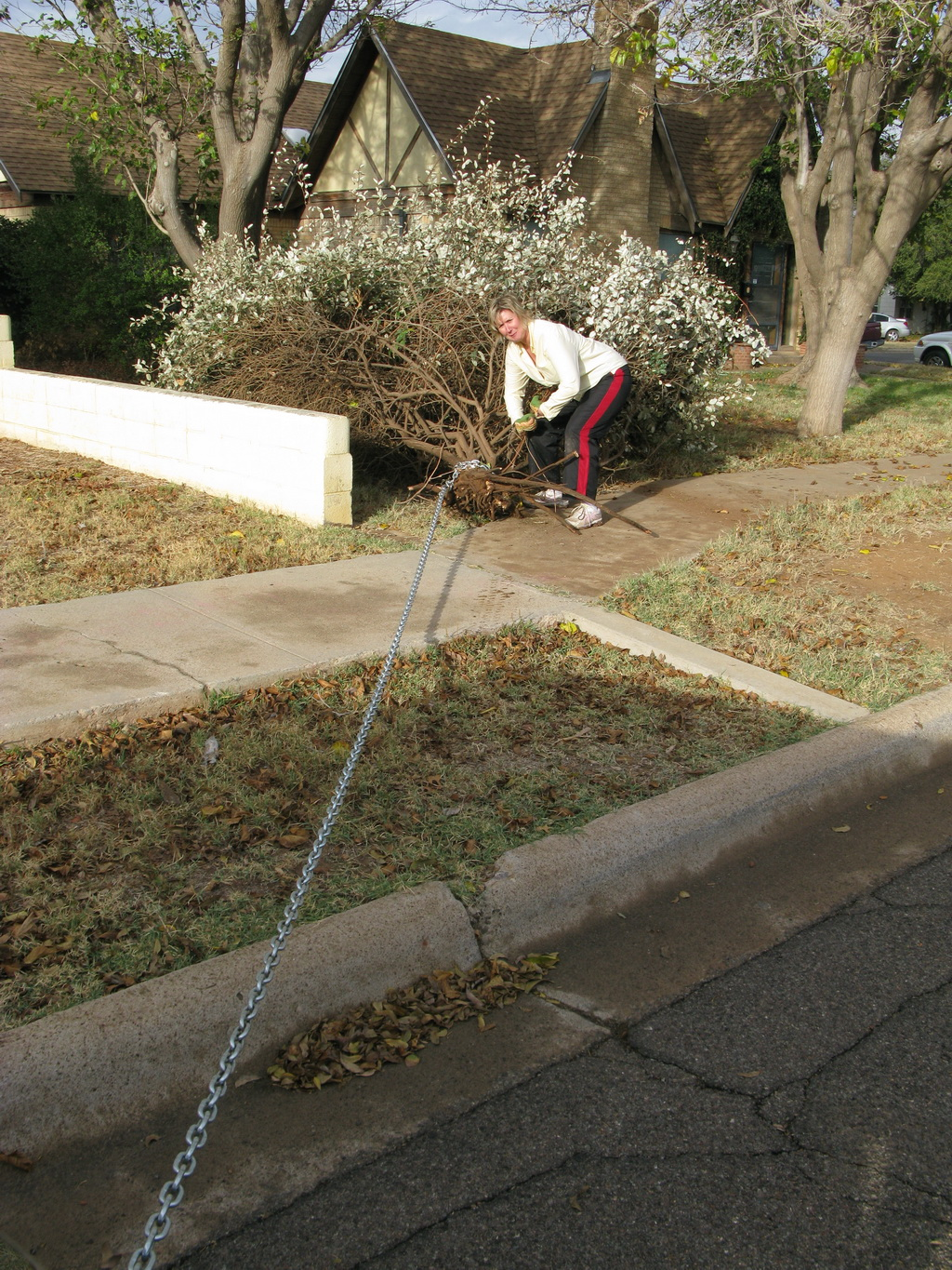 Ann yanking shrubs with truck and chain